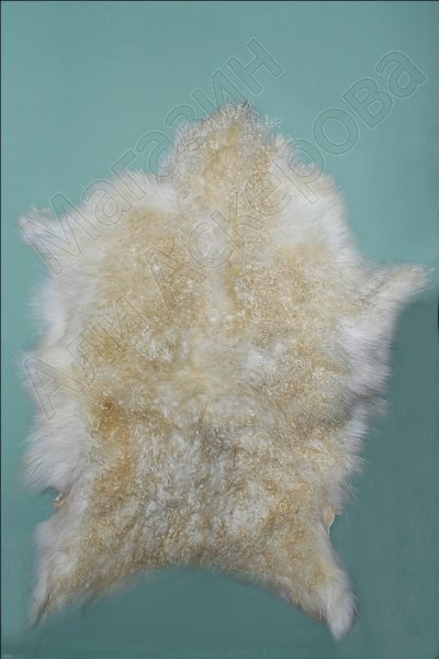 Натуральная козлиная шкура высший сорт белого цвета